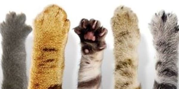 five all-colors extended cat paws
