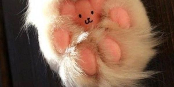 white furry cat paw with face drawn on its pink paw pads
