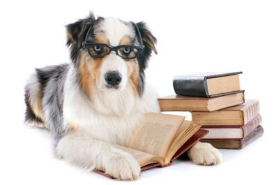 Dog and Books image