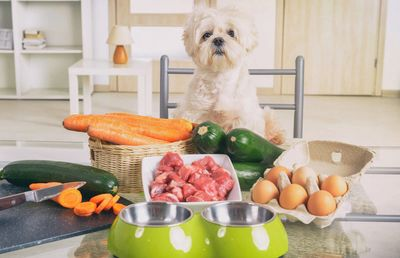 Dog and fresh food image
