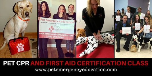 Pet CPR and First Aid Class image