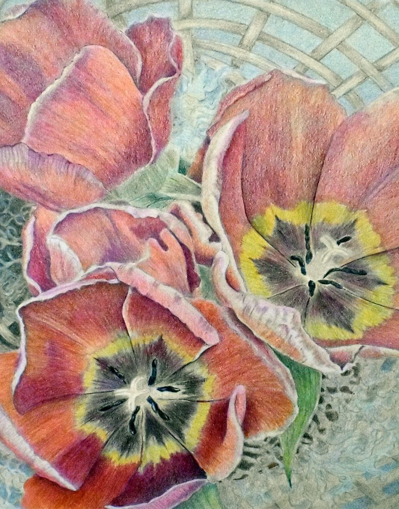 """Miss Suzie's Tulips."" Colored pencil, 11"" x 14"" by Cindy Rhodes."
