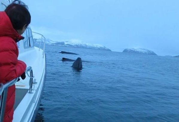 Whale Watching Tromso