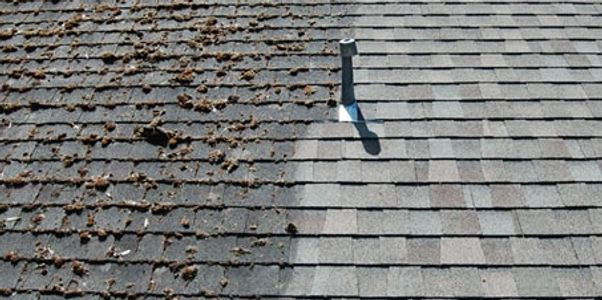 roof cleaning clean roof no moss algae lichen moss removal