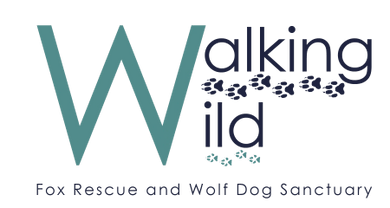 Walking Wild Fox Rescue and Wolf Dog Sanctuary