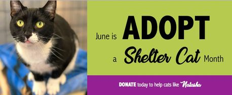 Adopt a Shelter Cat Month