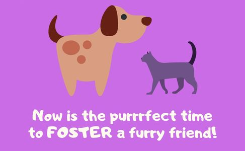 Now is the perfect time to foster a shelter cat or dog.