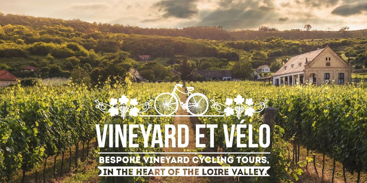 Vineyard cycling tours wine tours in Loire Valley