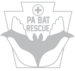 Pennsylvania Bat Rescue
