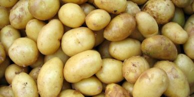 Potatoes are one of the best food crops according to the UN