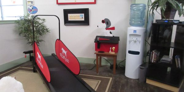 Dog Pacer Treadmill, Free Dog Treadmill, Exercise your Dog, Walk the Dog, Puppy Energy, Pet Health