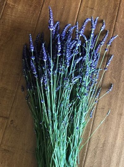 Gros Bleu French lavender spikes have  deep almost navy blue colour