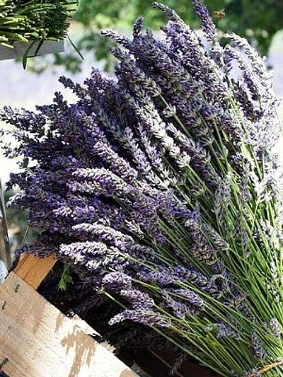 Grosso French lavender bundles for health & beauty products