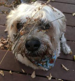 Barkindales dog wash boutique dog wash grooming satisfaction guaranteed barkindales dog wash solutioingenieria Images
