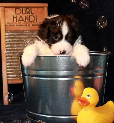 Puppy in wash tub