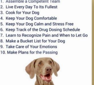 10 ways to prepare for a dog with cancer