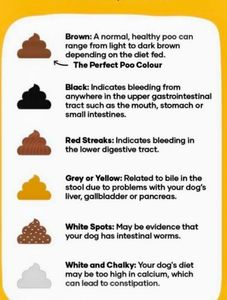 color of poop and what it means