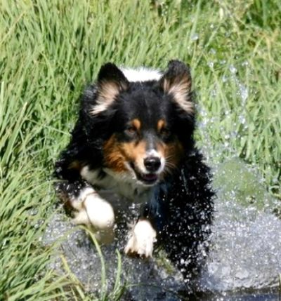Ranger running in water