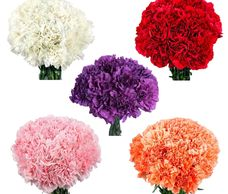 wholesale bulk fresh cut carnation flowers.