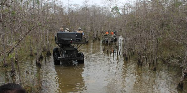 swamp buggy, swamp land, everglades, water, nature, big cypress swamp tours, cypress trees, swamp tours