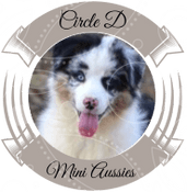 Circle D Mini Aussies
