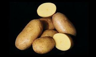 whole and cut potatoes showing Agria golden inside, on black background