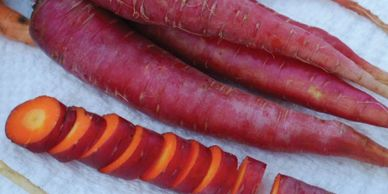 vivid closeup of red dragon carrots with one cut into thick slices showing orange interior