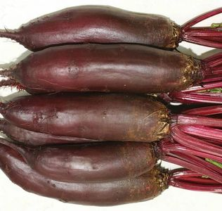 bunch of long deep burgundy coloured beets with tops still on, white background