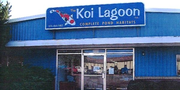 Visit Koi Lagoon in Fort Collins.