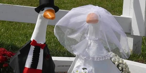 "Picture of 2 concrete ""geese"" dressed up as Husband and Wife."