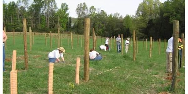 A picture of people planting grapes in the vineyard.