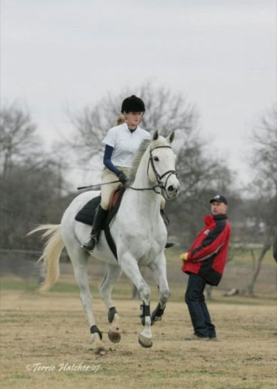Bring your horse to Wainui Farm for training, lessons, instruction. Dressage, Show Jumping, Eventing