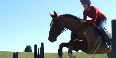 Nick Larkin, Wainui Farm. Training, instruction, lessons helping solve problems for horses & riders.