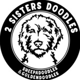 2 Sisters Doodles-Sheepadoodles and Goldendoodles
