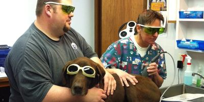 Laser Therapy reduces pain and inflammation, improves mobility, speeds recovery and enhances quality