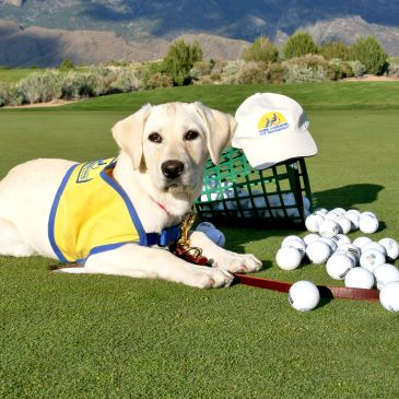 Canine Companion puppy with golf items