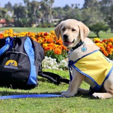 Canine Companion Puppy with logo backpack
