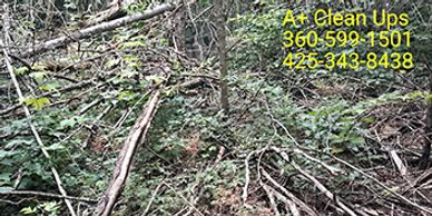 Bellingham Yard Cleanup Blaine Yard Cleanup Sudden Valley Yard Debris Property Cleanup Bellingham