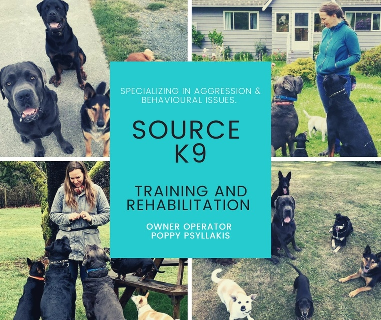 Nanaimo K9 Training and Rehabilitation