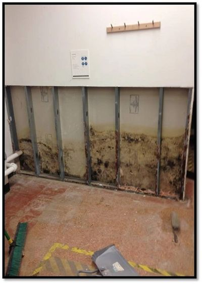 Mold Remediation Mold Damage EDS Property Restoration Mold Repair Commercial Mold Residential Mold