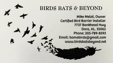 Birds Bats and Beyond LLC