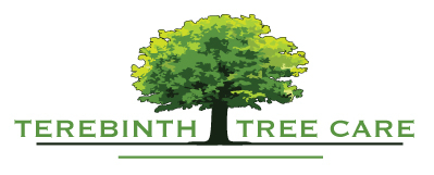 Terebinth tree care