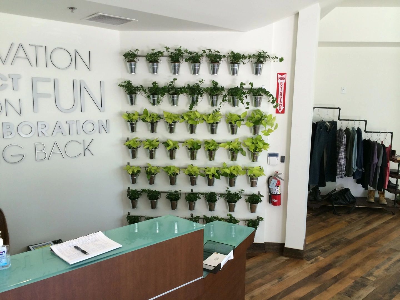 Go Green Interior Plants