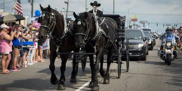 horse drawn hearse, horse drawn funeral, percheron teams, horse drawn carriage texas louisiana