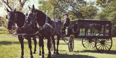 horse drawn hearse, horse drawn funeral, percheron teams, horse drawn carriage company