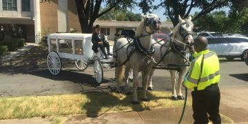 horse drawn hearse, horse drawn funeral, percheron teams, horse drawn carriage texas oklahoma