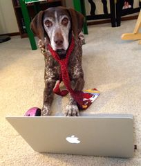 Virtual Dog Training Consults