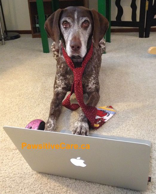 Pawsitive Pet Care's Virtual Pet Training Consultations are available by video or phone