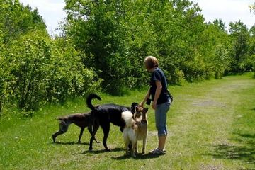 Pre-paid Start-up Dog Training Package