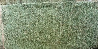 3x4x8 large bales of alfalfa